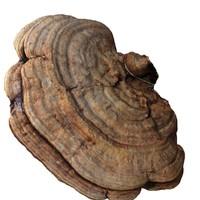 mushroom wood