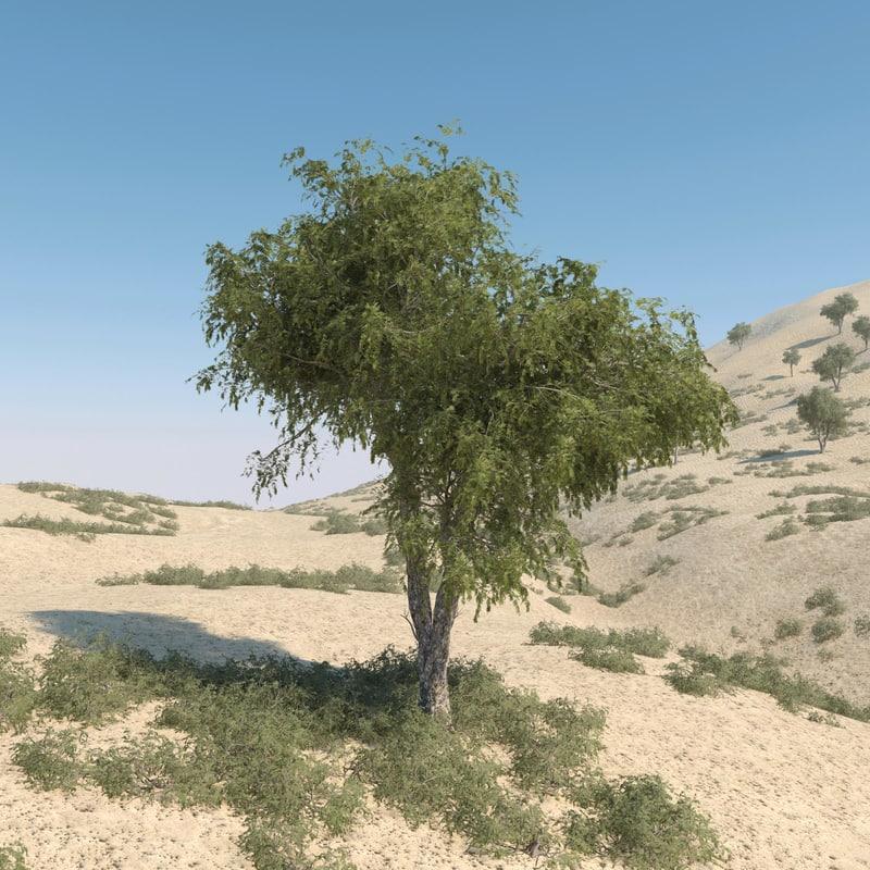 max ghaf trees