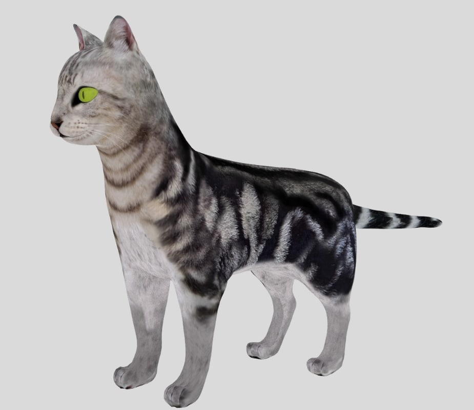 american shorthair cat 3d model
