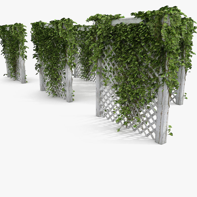 Tree 3ds max Ivy generator Plugin