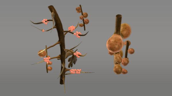 root nodules obj