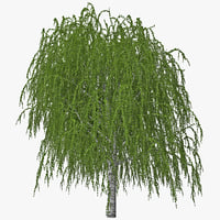 birch tree 3d model
