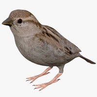 house sparrow 3d 3ds