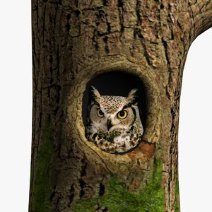 3d owl tree