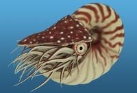 nautilus ammonite max