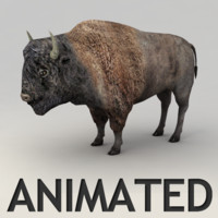 Bison Animated