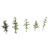green plant max