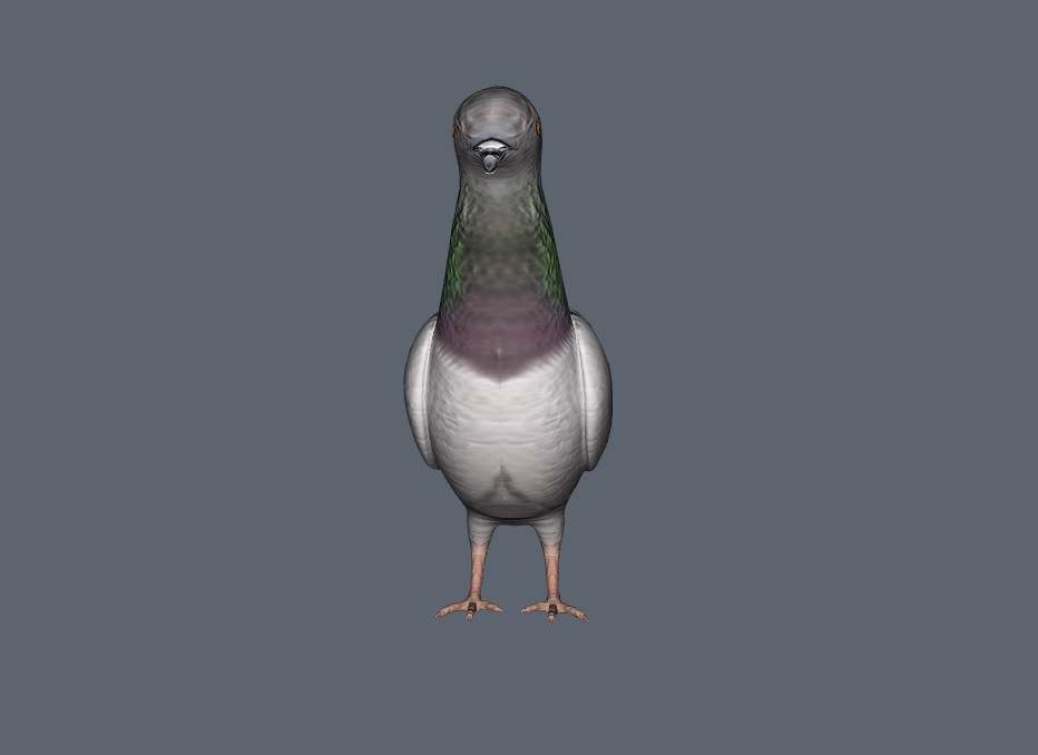 pigeon 3d max