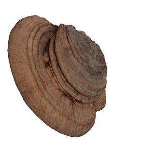 woody mushroom obj free