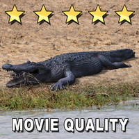 3d crocodile animate