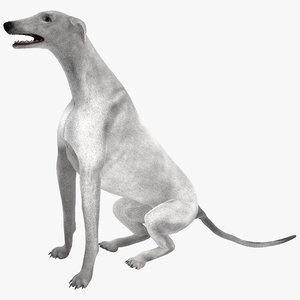 australian greyhound 2 pose 3d model