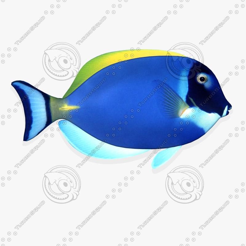 3d wall tropical fish fg model