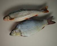 3d 3ds fish