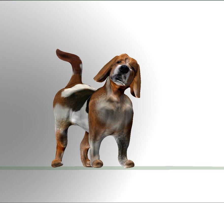3d beagle dog model