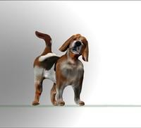 Beagle dog 3d