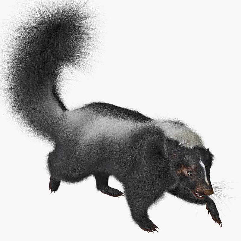 3ds max skunk pose 2 fur