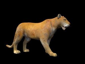 3d realistic lioness model