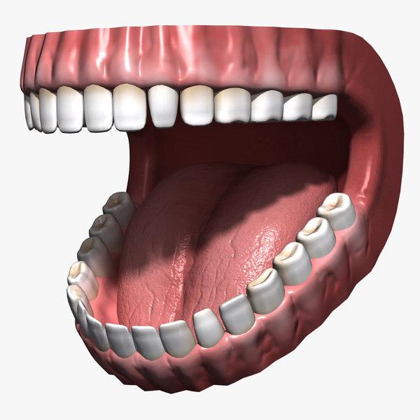human mouth teeth gums obj