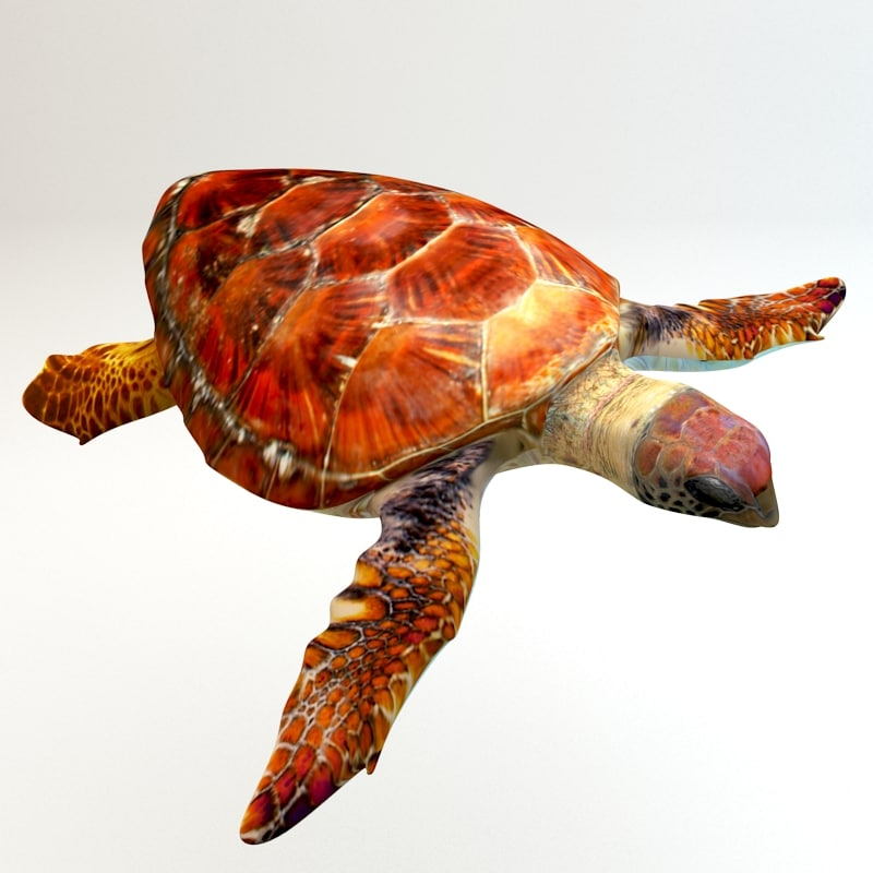 3ds max sea loggerhead