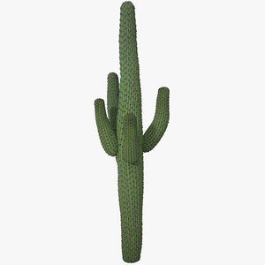 3d mexican cactus model
