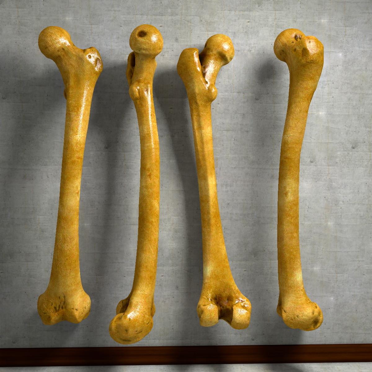 thigh bone femur c4d, Human Body