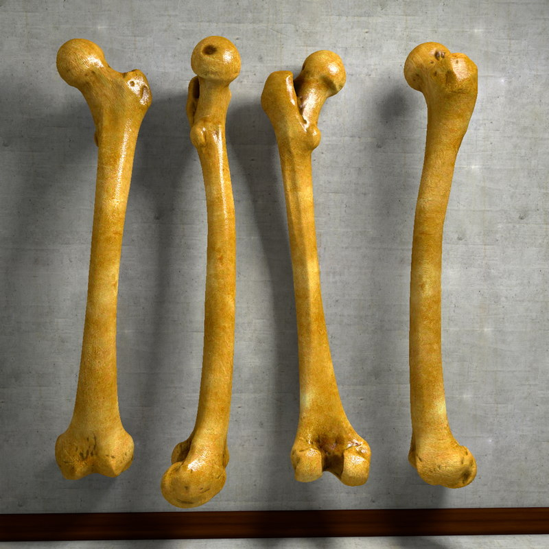 thigh bone femur c4d, Human Body