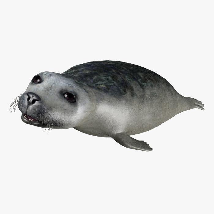 3d seal sea model