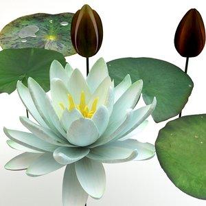 3d model plants flower