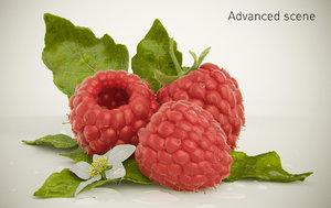 raspberry raspbery 3d model