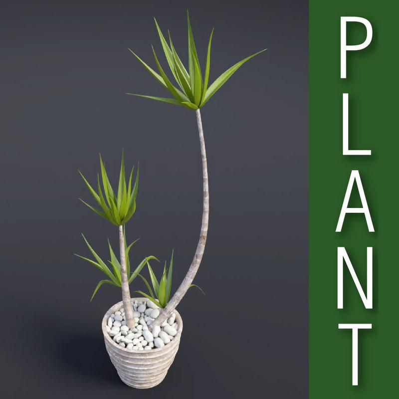 obj dracaena plant