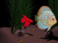free ma model fish