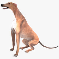australian greyhound pose 4 3d model