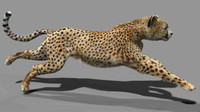 3d rigging animation cat