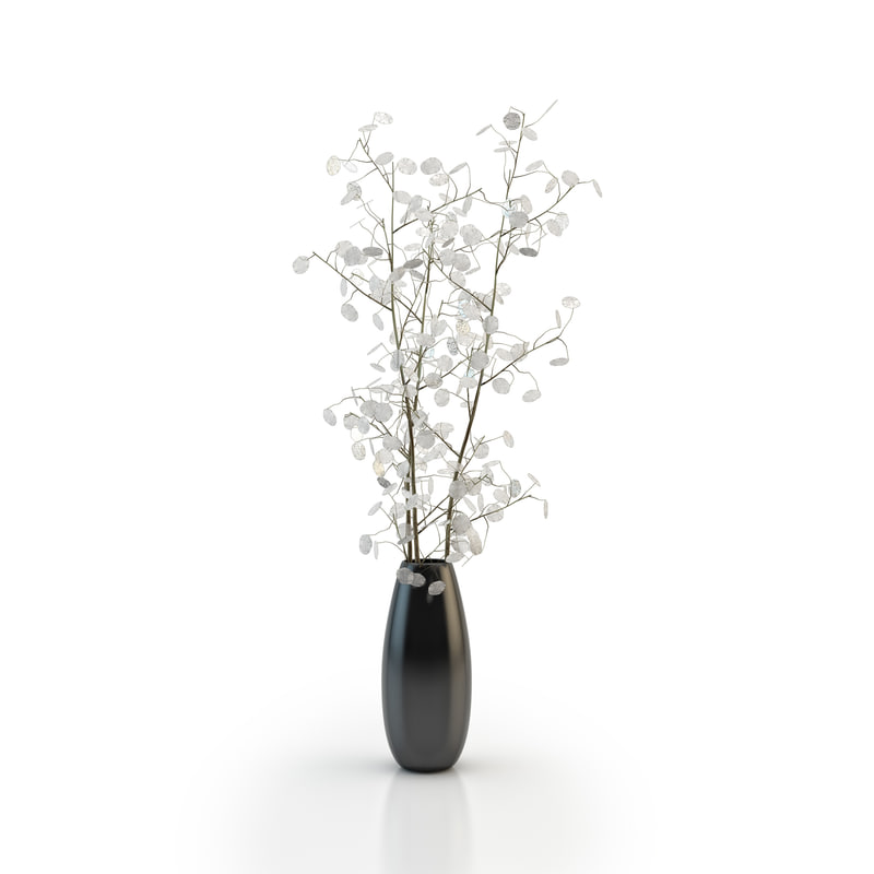 vase lunaria 3d max