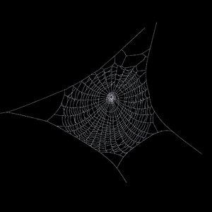 spiderweb 3d model