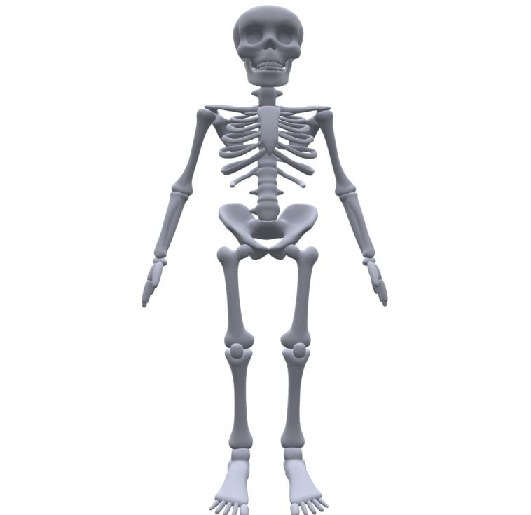 cartoon skeleton 3d model