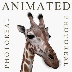 3d realistic giraffe model