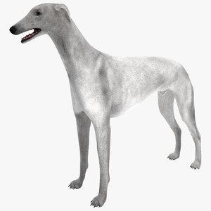 maya australian greyhound 2 fur