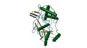 3d model hemocyanin