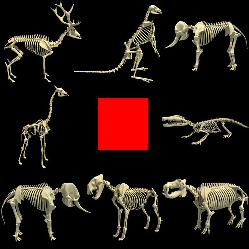 3d model skeleton animal