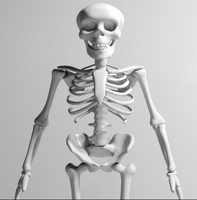 cartoon skeleton max