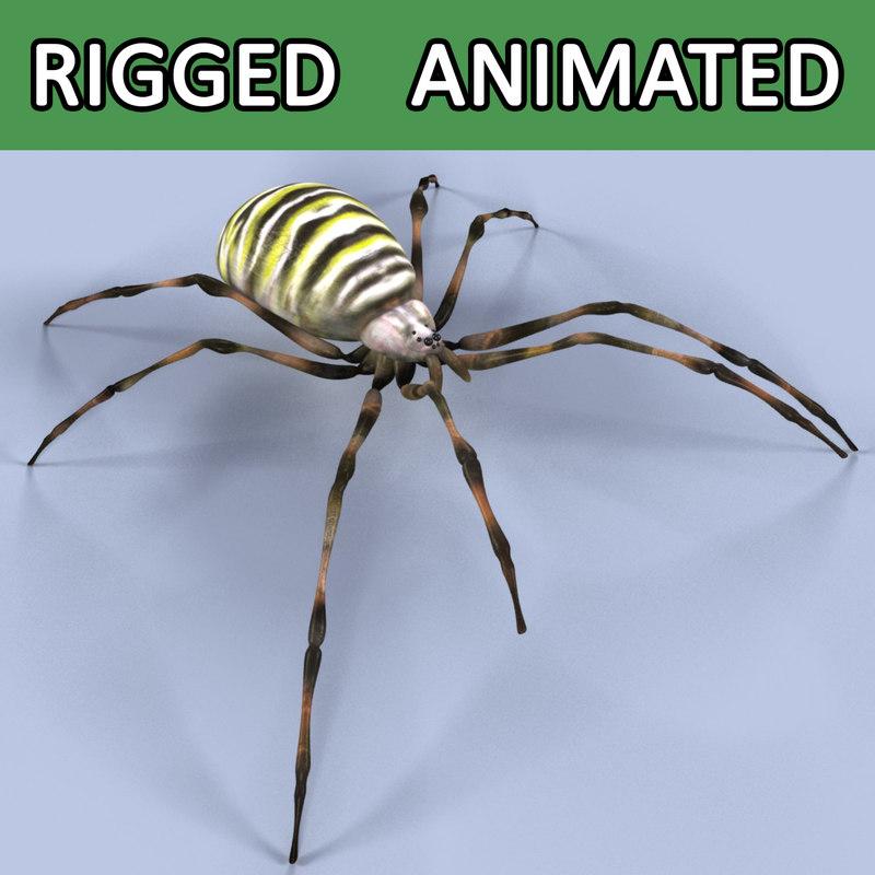 spider argiope bruennichi max