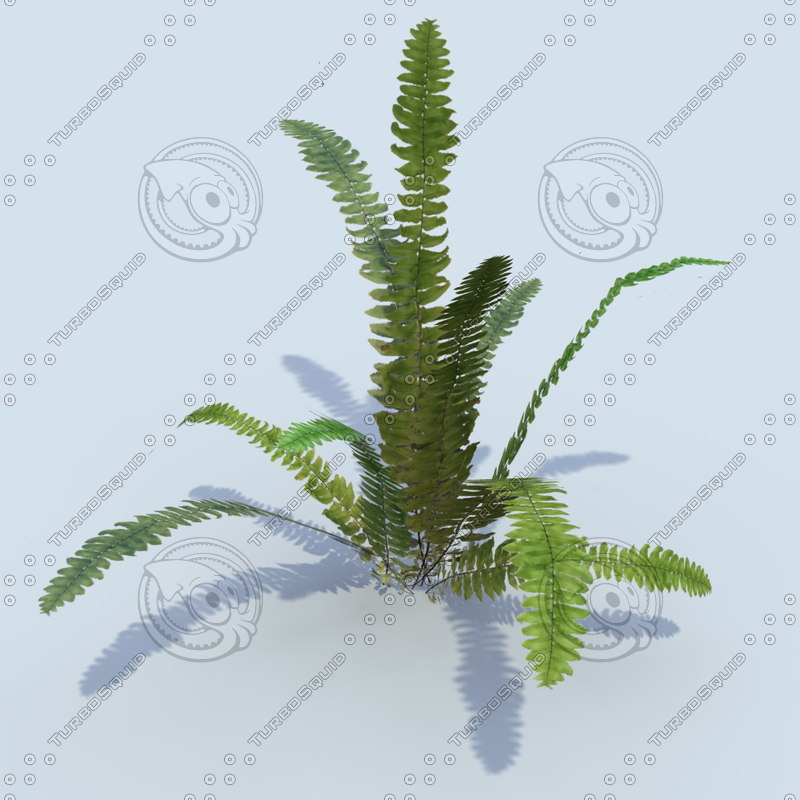 3ds max fern plant