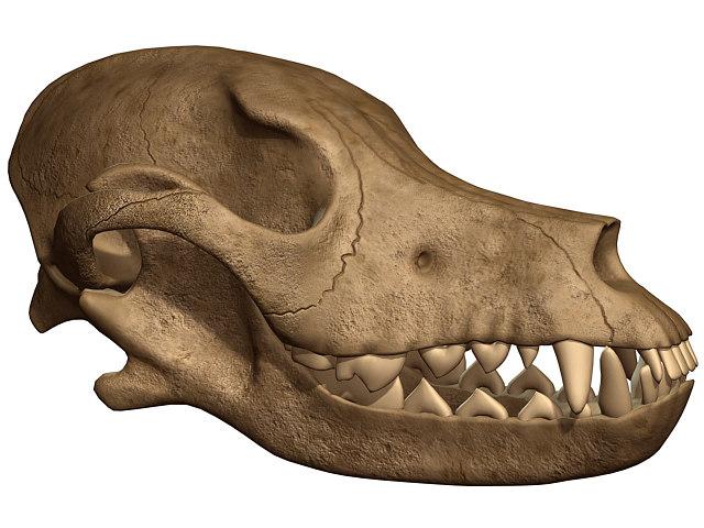 dog skull 3d max