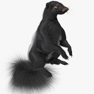 skunk pose 4 fur max