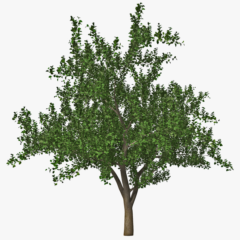 apple tree 2 3d model