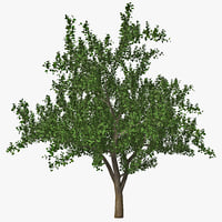 apple tree 2 3d model