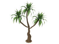 medium palm tree 3d lwo