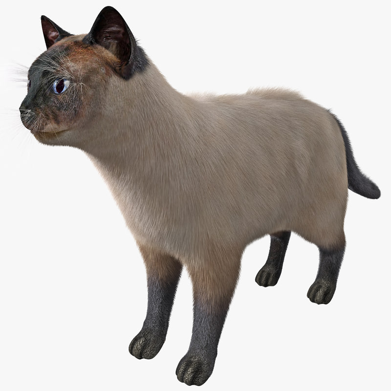 siamese cat rigged fur 3d model