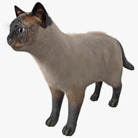 siamese cat rigged fur 3d model